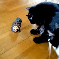 猫雑貨/3D/黒猫/ペット/猫/インテリア/... 札幌の雑貨店で見つけた、3Dプリンターで…(4枚目)