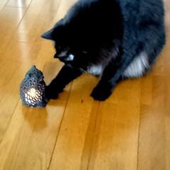 猫雑貨/3D/黒猫/ペット/猫/インテリア/... 札幌の雑貨店で見つけた、3Dプリンターで…(3枚目)