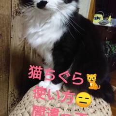 猫ちぐら🐈/DIY/雑貨/イケア ハンドメイド猫ちぐら🐈 我が家のニャンズ…