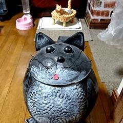 令和の一枚/LIMIAペット同好会/にゃんこ同好会/雑貨/雑貨だいすき 猫ちゃんですよ✌️ お気に入り🎵