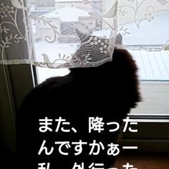 北海道/冬景色/くーちゃん🐈/LIMIAペット同好会/猫/にゃんこ同好会/... いつも、くーちゃん🐈ここから、ママが帰っ…