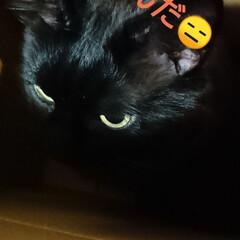 猫さん/暮らし おはようございます🙇 朝から、ニャンズ🐈…(3枚目)