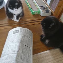 猫トンネル短いバージョン/ペット/ハンドメイド/猫/にゃんこ同好会/うちの子自慢 猫トンネル🐈🎵短いバージョン作りましたが…(4枚目)
