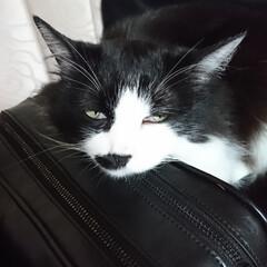 猫好き こんばんは🐱 プリティ💕ビーチの寝落ち‼️