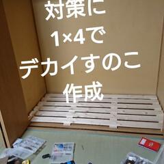 北海道/ゴールデンウィークDIY🛠️/春のフォト投稿キャンペーン/ありがとう平成/GW/トイレ/... 皆さーん❕おはようございます🙇 ゴールデ…(2枚目)