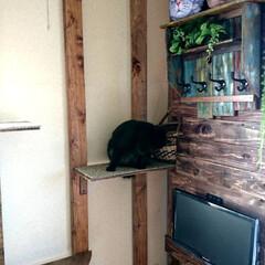 黒猫/ラブリコ/キャットウォークDIY🛠️/暮らし/DIY/わたしの作業部屋 おはようございます🤗 只今、室温24.5…(2枚目)