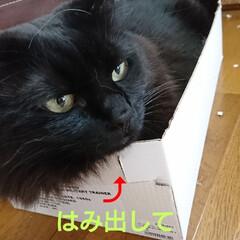 にゃん倶楽部/くーちゃん🐈/黒猫/LIMIAベスト収納2019/リミアの冬暮らし おはようございます🤗 気がつくと、くーち…