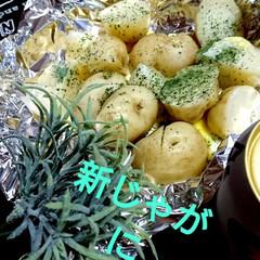 北海道新じゃが/ご飯/わたしのごはん こんばんは🎵 北海道じゃが芋🥔収穫1日目…