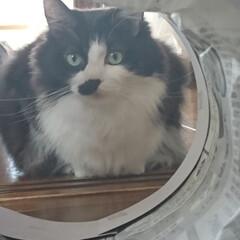 猫トンネル短いバージョン/ペット/ハンドメイド/猫/にゃんこ同好会/うちの子自慢 猫トンネル🐈🎵短いバージョン作りましたが…