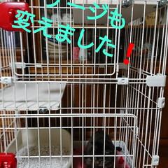 トイレトレーニング🚽/キジトラ猫さん/保護にゃん🐈/ここが好き こんばんは🤗 保護にゃん🐱8日目‼️ す…(3枚目)
