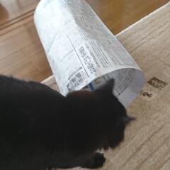 猫トンネル短いバージョン/ペット/ハンドメイド/猫/にゃんこ同好会/うちの子自慢 猫トンネル🐈🎵短いバージョン作りましたが…(8枚目)