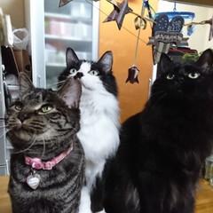 仲良し😃🍒😃/保護にゃん🐈/リミアの冬暮らし 10月に保護した、左のキジトラ猫さんのし…(3枚目)