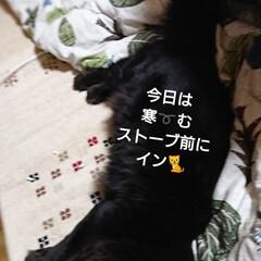 くーちゃん🐈/ペット/猫/にゃんこ同好会/おやすみショット おはようございます🙇 北海道まだまだ、朝…