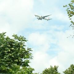飛行機/お盆/おでかけ 千歳空港付近走行中! 飛行機が次々降りて…