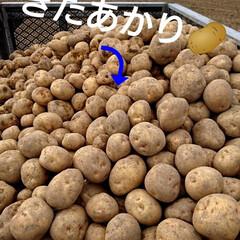 北海道/新ジャガ/わたしのごはん 今年も友farmer🎵 🥔いも収穫無事終…