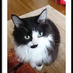 猫ちゃん/ペット おはようございます‼️ こんとこ、ピーチ…