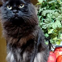 なにか?/くーちゃん!/黒猫/ペット くーちゃん!やっと、カウンターはじっこに…