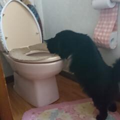 恥ずかしい(*_*;/黒猫/点検よーし/ペット くーちゃん!やめて✋・・・・・ ○○○の…