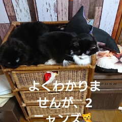 ペット仲間募集/猫/にゃんこ同好会/おやすみショット 今夜はここでおねむ😪💤💤(2枚目)