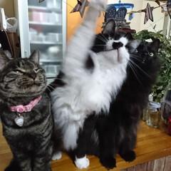 仲良し😃🍒😃/保護にゃん🐈/リミアの冬暮らし 10月に保護した、左のキジトラ猫さんのし…(4枚目)