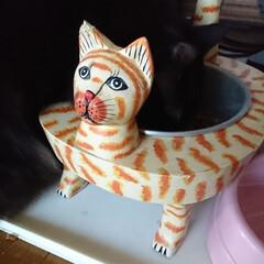 猫好き/ニャンズ🐈 こんばんはでーす🐄 我が家ニャンズ🐈のご…(2枚目)