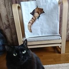 猫ちゃんバック/ねこ 裏はしっぽがきゅーと♥️