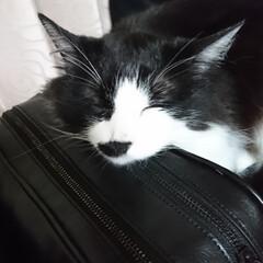 猫好き こんばんは🐱 プリティ💕ビーチの寝落ち‼️(3枚目)