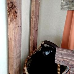 黒猫/ラブリコ/キャットウォークDIY🛠️/暮らし/DIY/わたしの作業部屋 おはようございます🤗 只今、室温24.5…(4枚目)