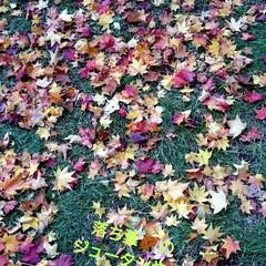 北海道/復興割クーポンで来て下さい/秋を 引き続き北大ポプラ並木編🍂🍁
