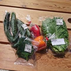 夏野菜 帰ったら冷蔵庫のミョウガとパプリカ、キュ…