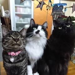 仲良し😃🍒😃/保護にゃん🐈/リミアの冬暮らし 10月に保護した、左のキジトラ猫さんのし…(2枚目)