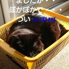 くーちゃんストーカー/ペット/猫/おやすみショット いつもの朝‼️ 台所で片付け中・・・くー…