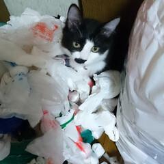 いたずら猫ちゃん ピーチ❗レジ袋を全部だして、埋まっていた…