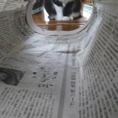 猫トンネル短いバージョン/ペット/ハンドメイド/猫/にゃんこ同好会/うちの子自慢 猫トンネル🐈🎵短いバージョン作りましたが…(5枚目)