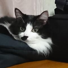 北海道大地震/猫ちゃん のんきにお気に入りの場所でイン‼️  地…