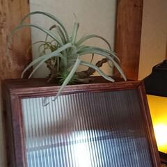 木工雑貨/ブレッドケースカフェ風/気まぐれご~やん😎工務店🛠️/収納/雑貨/DIY/... おはようございます🤗 昨日は北海道凄い雨…(6枚目)
