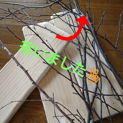 🛠️材料/小枝/森/リミアな暮らし/雑貨/ハンドメイド/... 連続投稿🙇🙇🙇 ついでに、森で枝を拾って…