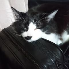猫好き こんばんは🐱 プリティ💕ビーチの寝落ち‼️(2枚目)