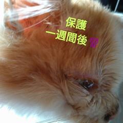 真之介です/里親さん募集中/猫さん大好き/早く良くなってね/風間引いた?/保護ニャン 保護ニャンその後☝️ 一週間後からくしゃ…(2枚目)