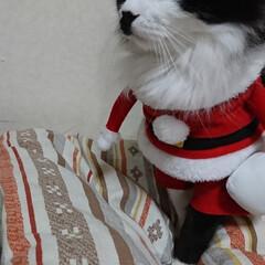保護にゃん🐱しらす/クリスマス2019/リミアの冬暮らし 保護にゃん🐱キジトラ猫さん🎵 名前つけま…(5枚目)