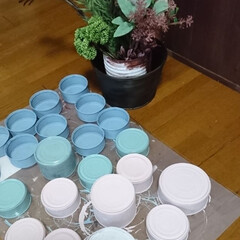 多肉植物/リサイクル/リメ缶/リミアの冬暮らし/キャンドゥ/ダイソー/... 多肉ちゃん用リメ缶ベタ塗り完了💪💪 この…(2枚目)