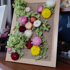 「家で咲いてるアナベルと貝細工を グルーガ…」(1枚目)