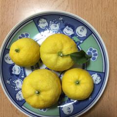秋 庭で収穫🍋柚子〜〜