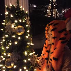 ツリー/#クリスマス 寒いのは苦手だけれど、何故かイルミネーシ…