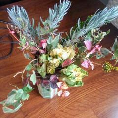 ドライフラワー/ハンドメイド 葉牡丹を自然乾燥のドライフラワーに 挑戦…