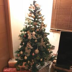 ゴールド/クリスマスボール/リボン ツリー