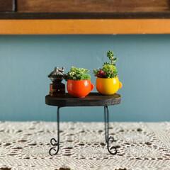 リメイク鉢/多肉植物寄せ植え/多肉植物/多肉/雑貨/DIY/... 食後のコーヒー☕️はいかが⁇  ここで問…