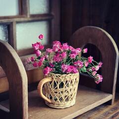 レトロインテリア/ミニバラ/ドライフラワーのある暮らし/ドライフラワー/玄関/インテリア/... バラの季節から 紫陽花の季節へ。  雨が…