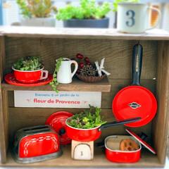 ジャンクガーデン/多肉植物/サビ/多肉寄せ植え/ガーデニング 爽やかな1週間の始まり  みなさん朝ごは…