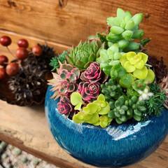 癒し/多肉寄せ植え/多肉/多肉植物 盆栽用の鉢で パフェ風寄せ植え〜〜🍧  …(2枚目)